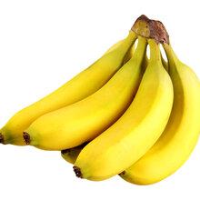 新鲜水果进口报关
