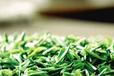 南京雨花茶产业发展拥有的优势