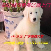 东莞哪里有卖大白熊大白熊卖多少一只图片