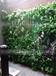 供应陕西西安游乐场绿植景观健身房仿真绿植墙
