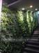 陕西西安商场中空绿植装饰楼梯绿植装饰绿植小景