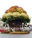 陕西西安绿植景观创意绿植雕塑
