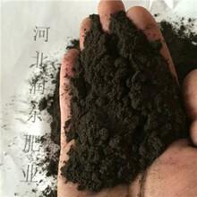 河北鸡粪发酵有机肥颗粒有机肥猪粪羊粪牛粪