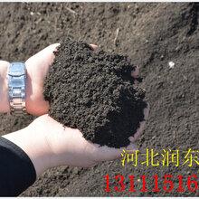 果树专用肥发酵鸡粪有机肥用肥旺季大量现货欢迎来电
