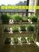 果蔬育苗生长器