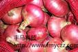 豐馬科技產地直供優質洋蔥種子批發價格北島紅皮洋蔥批發洋蔥網