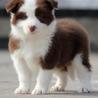 高品质纯种健康各类宠物狗可上门挑选