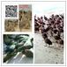 北京孔雀养殖场#一年的蓝孔雀多少钱#孔雀养殖技术常见问题