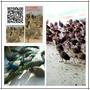 北京孔雀养殖场#一年的蓝孔雀多少钱#孔雀养殖技术常见问题图片