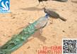 哪里有卖蓝孔雀的#小孔雀多少钱一只#小孔雀饲养环境要求