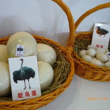 小鸵鸟卵黄囊炎注意事项#山东哪里有鸵鸟养殖场批发鸵鸟苗