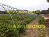 建设一个蔬菜大棚成本是多少首选郑州昊之鑫建造驻马店新乡晋城长治