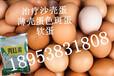 蛋雞拌料添加劑-減少缺陷蛋的雞益生菌
