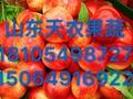 大量批发供应优质油桃图片