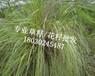 达州万源市边坡挂三维网绿化喷播植草施工