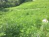 多年生黑麦草与一年生黑麦草种子的区别攀枝花