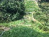 供應自貢常用草種荒山復綠選用什么植物種子