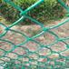生产销售公园防护网镀锌勾花网园林绿化包塑勾花网