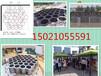 蜂巢迷宫价格蜂巢迷宫规格1.2米2.3米蜂巢迷宫制作厂家