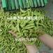青毛豆采摘機塑料刺不傷毛豆莢收獲機