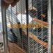 0.6mm喷灌浆金属网模-安平轻钢实心墙体灌浆网-有筋扩张网
