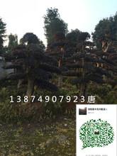 怎么做好绿化苗木的关口