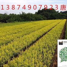 工程绿化苗木种植注意哪些地方