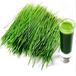 大麥若葉青汁粉、大麥葉粉、大麥苗粉代加工貼牌OEM/ODM