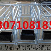 母猪限位栏定位栏定位栏厂家直销定位栏报价养猪设备定位栏图片