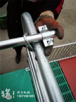 养猪设备价格镀锌管母猪产床多少钱贵州哪里有卖双体母猪产床的