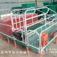恒力母猪产床养猪设备厂家直销优质母猪产床多少钱母猪产床价格图片