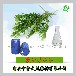 厂家直销纯正茶树油99%消炎杀菌改善毛孔