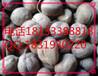 巴豆一公斤多少钱