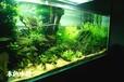 水草造景培训、加盟,水草缸及设备的批发销售,找山东本色水景