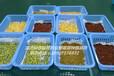 江西芽苗菜种植创造更加辉煌的明天!