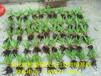 江西安徽湖北白芨种苗种植将获得丰厚的利益!