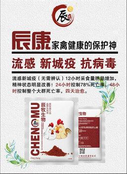 土雞氣囊炎呼吸道發病多防控方法雞氣囊炎用辰樂欣