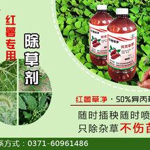 地瓜杀虫除草剂,红薯防虫,红薯除草剂图片