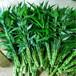 斗南四季花卉市场直批发富贵竹水养植物切花富贵竹绿色植物富贵竹