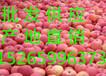 供应红富士苹果产地价格红富士苹果批发价格