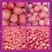 山东红富士苹果产地行情价格趋势