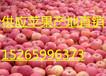 红富士苹果全国畅销红富士苹果近日行情价格