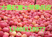 山东苹果价格/山东苹果批发价格