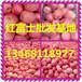 山东红富士苹果价格/山东红富士苹果市场价格