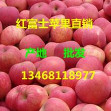 红富士苹果产地在哪里山东哪里红富士苹果便宜图片