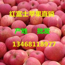 红富士苹果产地在哪里山东哪里红富士苹果便宜