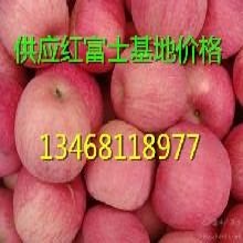 哪里红富士苹果便宜山东冷库红富士苹果价格