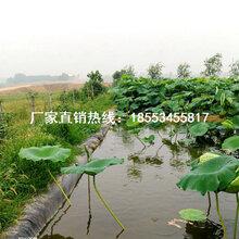 0.3-0.6毫米厚HDPE养殖专用防渗土工膜图片
