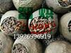 智烘牌柑普茶干燥系统,小型专业的柑普茶烘干机ZH-JN-HGJ03
