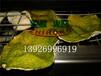 智烘牌陈皮烘干机,陈皮烘干设备ZH-JN-HGJ03干燥排湿同步进行